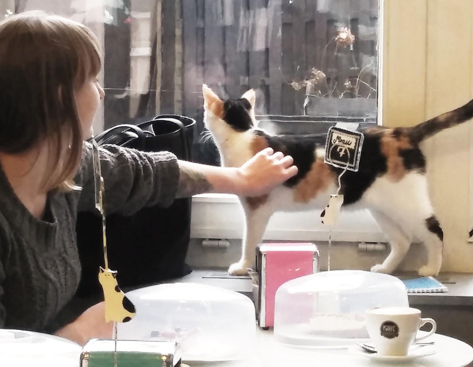 Kocia kawiarnia, czyli inwazja futrzaków