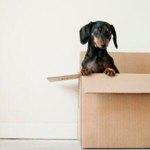 Przeprowadzka - pakowanie się